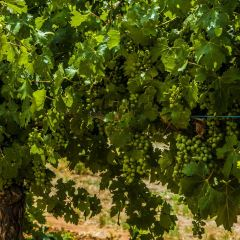 Barossa valley Estate Winery User Photo