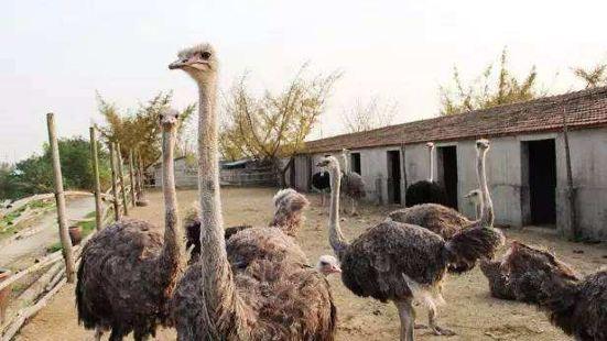 開沙島動物園
