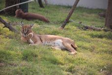 非洲狞猫展区-南通-AIian