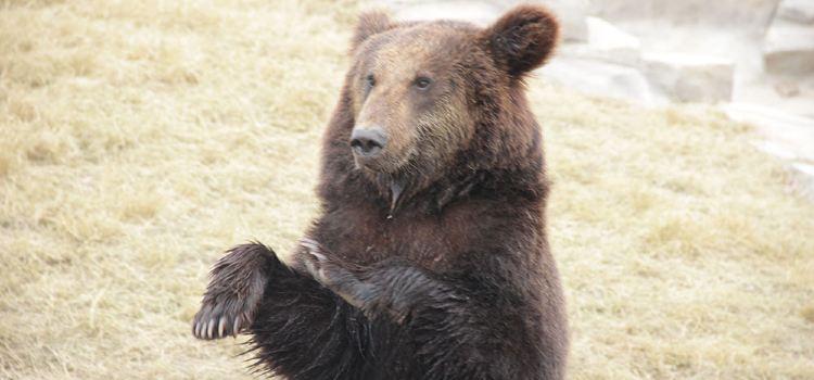 西伯利亞棕熊展區3