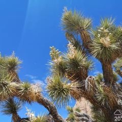 Joshua Tree National park User Photo