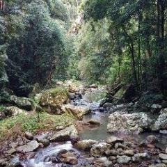 自然橋用戶圖片