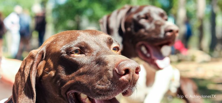 Dog House Drinkery & Dog Park1