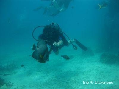 Sunn Odyssey Divers