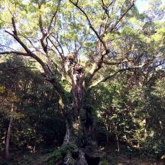 武雄市文化會館庭園 (舊武雄鍋島家庭園)用戶圖片