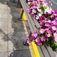 P Burgos Street User Photo