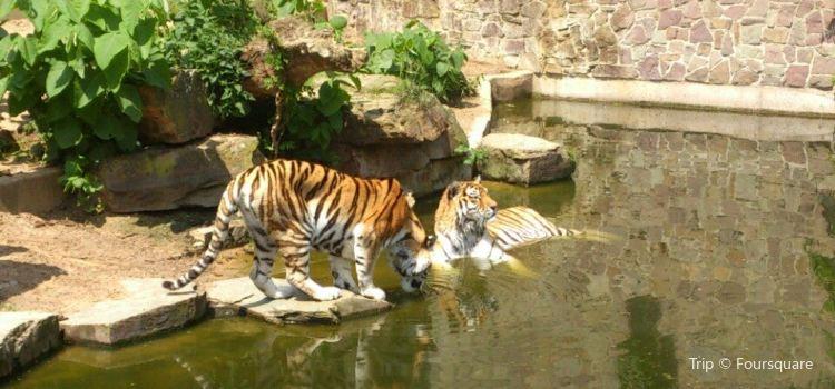安特衛普動物園