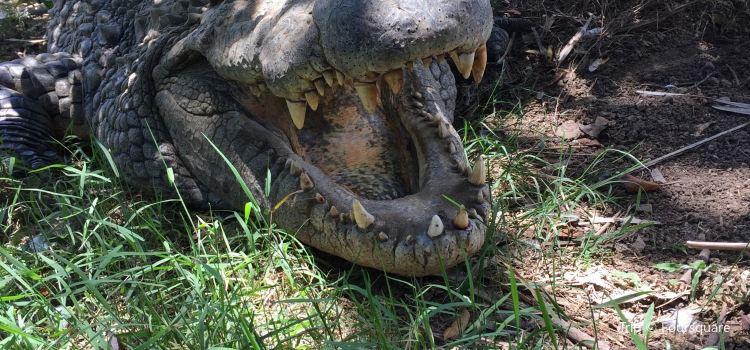 Croc Farm2