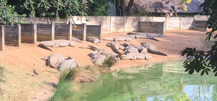 Riverbend Crocodile Farm1