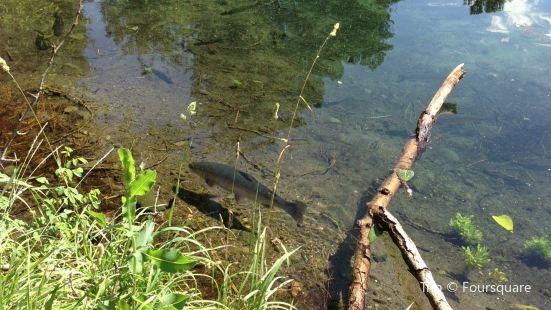 Winthrop National Fish Hatchery