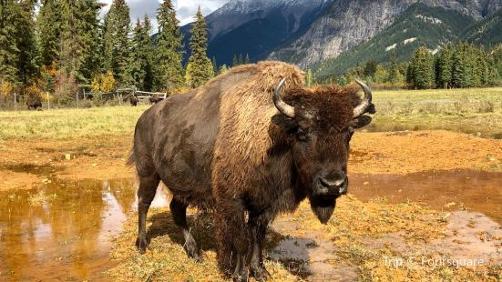 Rocky Mountain Buffalo Ranch & Guest Cottage Buffalo Tours