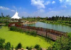 贡湖湾湿地公园-太湖-蔷薇_0