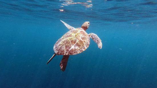 黑珍珠潛水旅遊中心