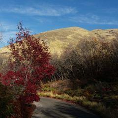 Red Butte Garden User Photo