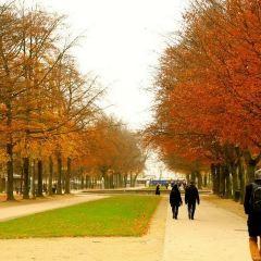 布魯塞爾公園用戶圖片