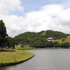 寧江森林公園用戶圖片