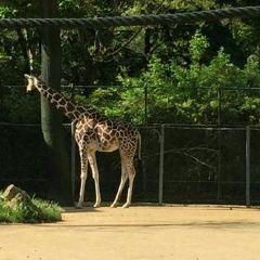 Zoo Frankfurt User Photo