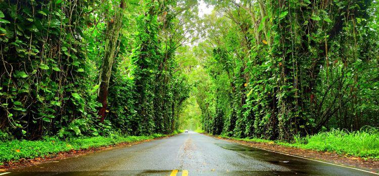 Koloa Heritage Trail