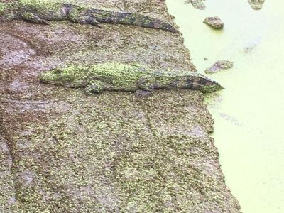 안후이 양쯔강 국립악어자연보호구역