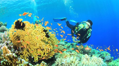 Great Barrier Reef Diving