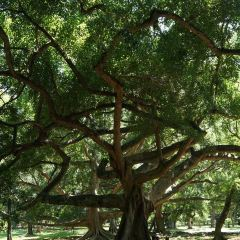 Victoria Park of Nuwara Eliya User Photo