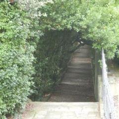 佩魯花園用戶圖片