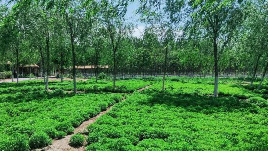 Xiqing Country Park