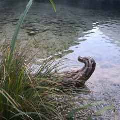 上湖用戶圖片