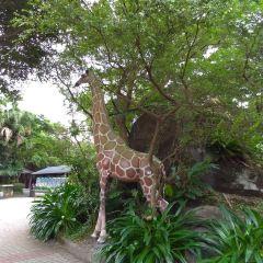 타이베이시립동물원 여행 사진