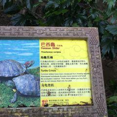 Emerald Trail, Ocean Park Hong Kong User Photo