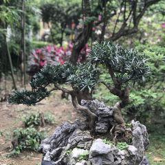루림이옥 정원 여행 사진