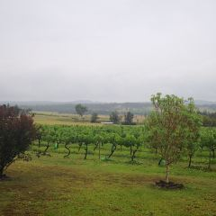 Blueberry Hill Wines User Photo