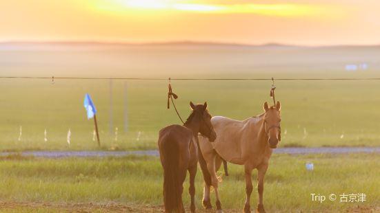 錫林郭勒大草原