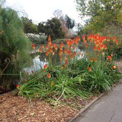 Adelaide Botanic Garden User Photo