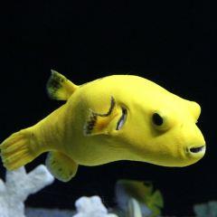海底世界用戶圖片