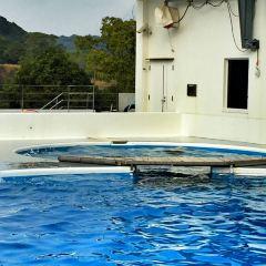 九十九島水族館用戶圖片