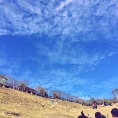 칭칭초원 여행 사진