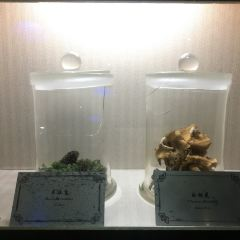 China Mushroom Museum User Photo