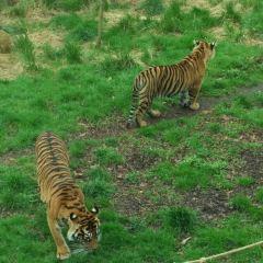 倫敦動物園用戶圖片