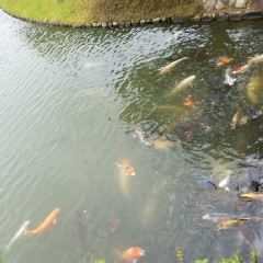리츠린 공원 여행 사진