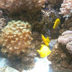 鄭州海洋館用戶圖片