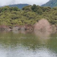 魯朗林海用戶圖片