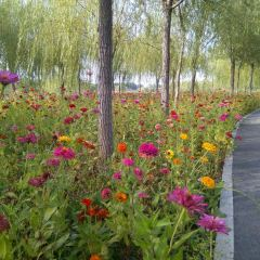 Dongyingyuan Expo Park User Photo