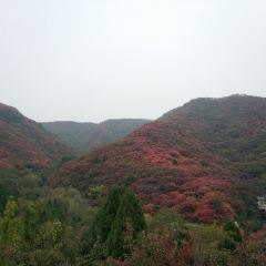 Red Leaves Canyon User Photo