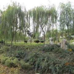 柳泉濕地用戶圖片