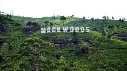 Mackwoods茶廠