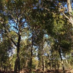 Landes de Gascogne Regional Natural Park用戶圖片