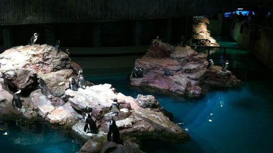 New England Aquarium Cafe