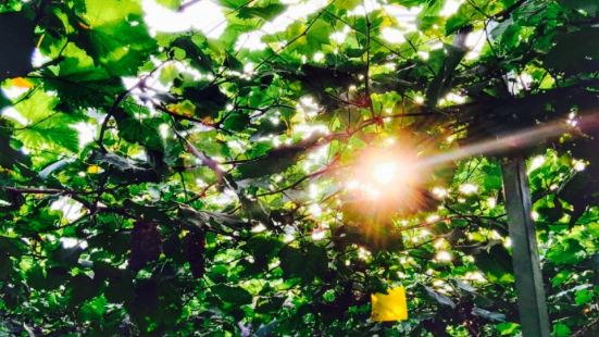 Lvyu Fruit Plucking Park