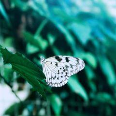 Butterfly Creek User Photo
